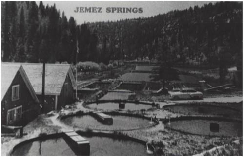 Postcard From Jemez Springs Showing Seven Springs Fish Hatchery